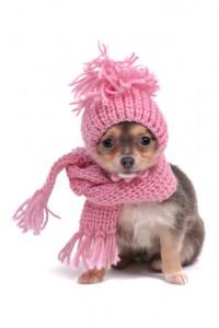 Animali vs freddo