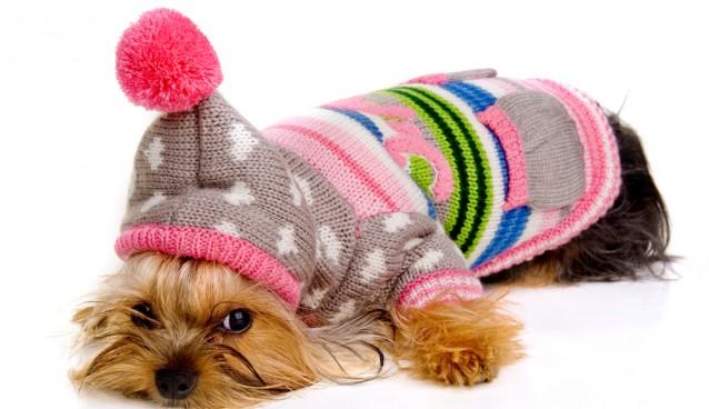 Animali e freddo